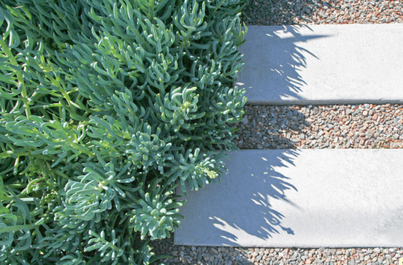 алтернативни идеи за озеленяване