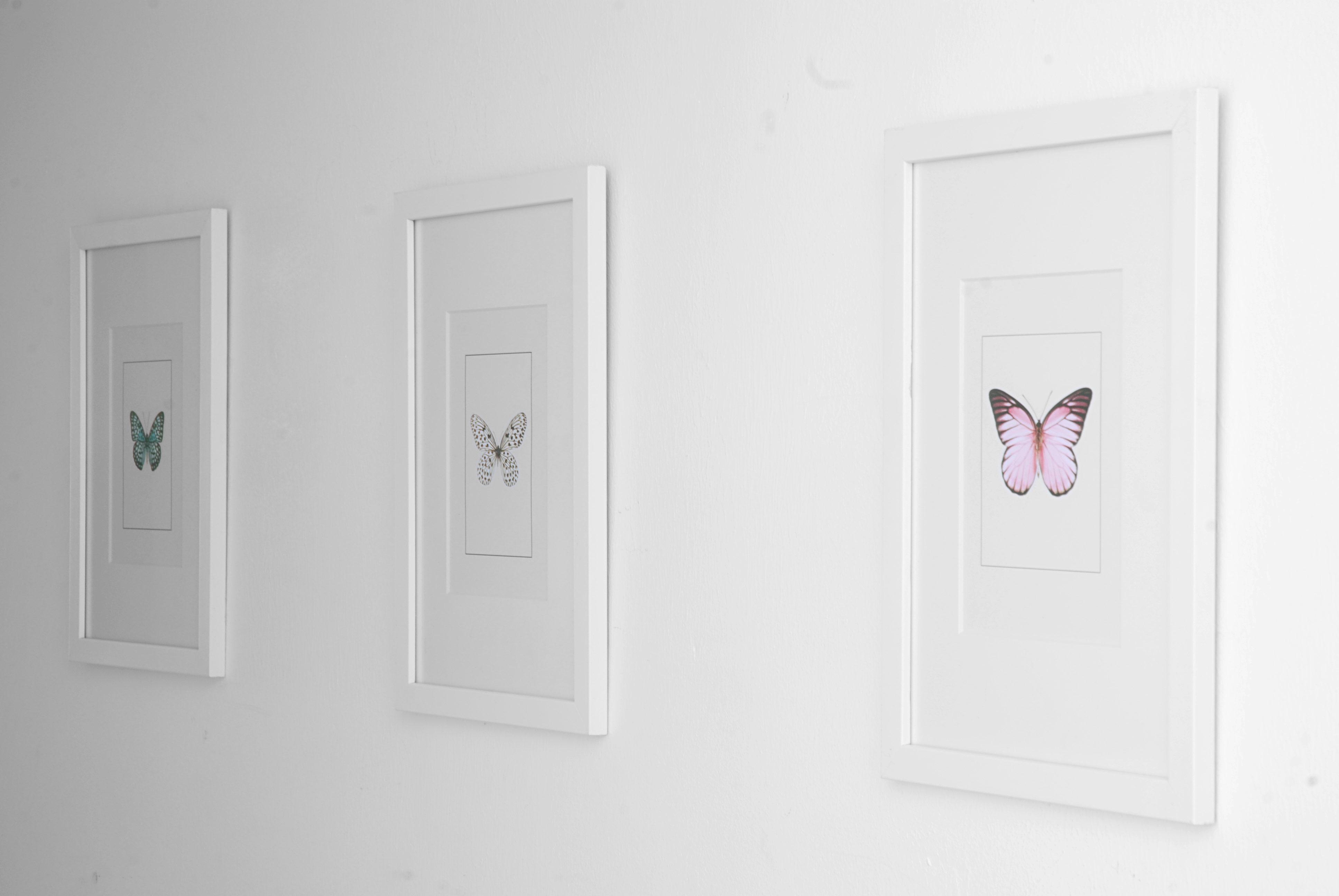 https://desenio.nl/nl/artiklar/posters/insecten-en-dieren/index.html